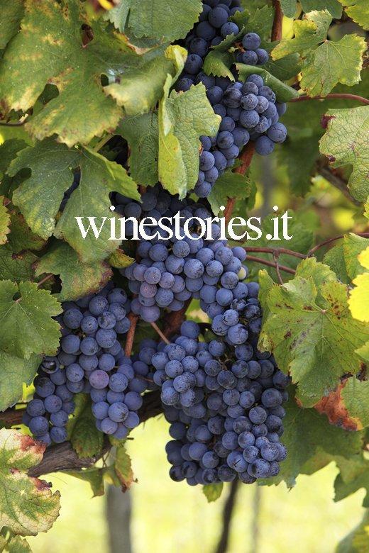 Terre del Principe - Winestories