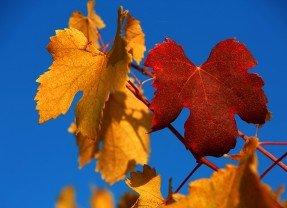 VinNatur, la natura in vigneto