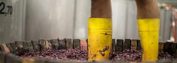 Pojer e Sandri – Fare il vino