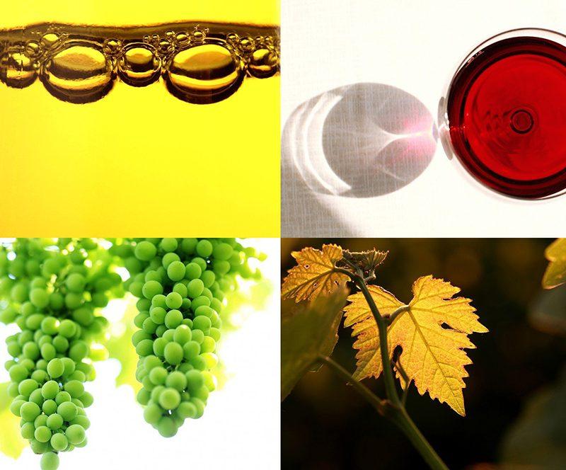 Dieci anni di Winestories